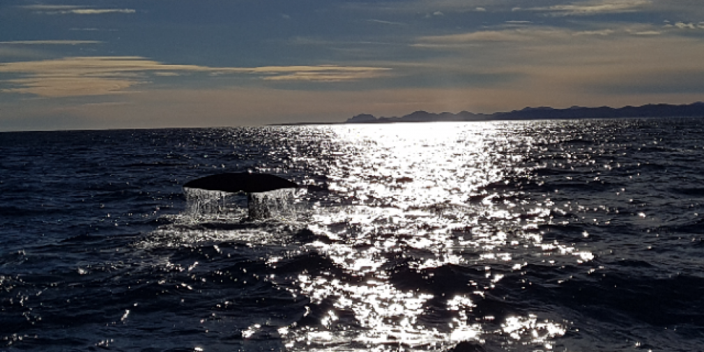 Préserver les Océans dans le monde de demain : Monaco Ocean Week.