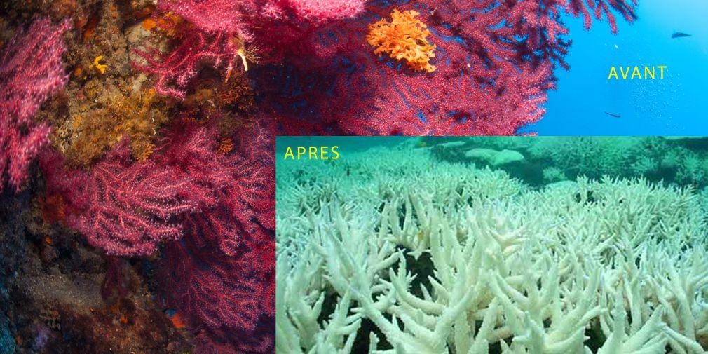 La Grande barrière de corail en danger?