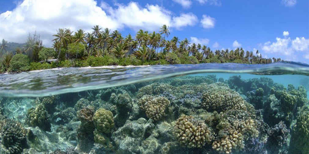 Deux scénarios pour le futur des océans en vue de la COP 21