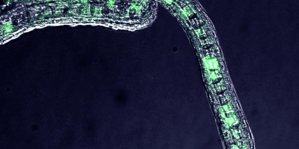 Le Cristal collectif du CNRS récompense le projet Multimage et OMERO