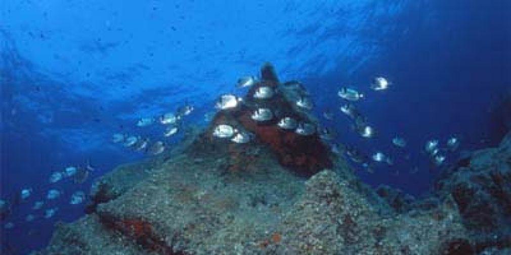 Seminaire de l'équipe B&B : Coastal ocean acidification and increasing total alkalinity in the NW Mediterranean Sea