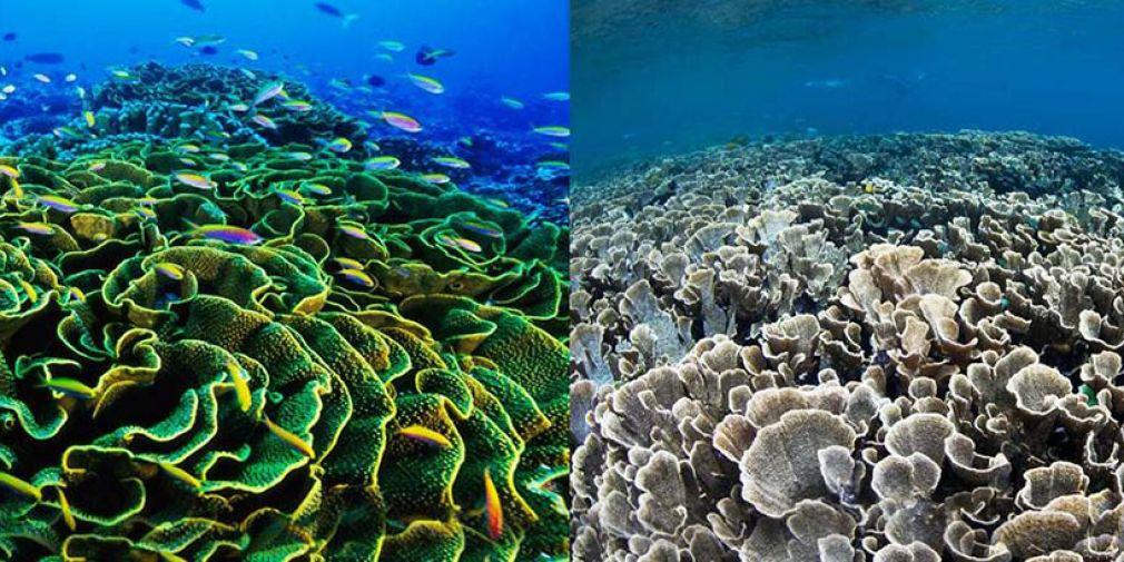 L'Initiative Oceans 2015 : « Objectifs Développement Durable (ODD ) » et « Our Ocean Valparaiso».