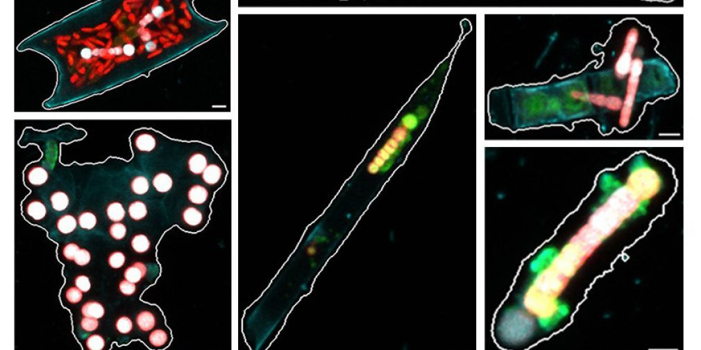 Prendre du recul pour mieux zoomer sur les organismes fixateurs d'azote dans l'océan global