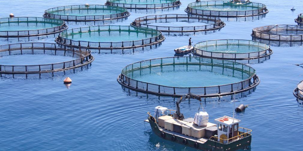 """""""Aquaculture durable"""" : réunion du Pôle Mer Méditerranée."""