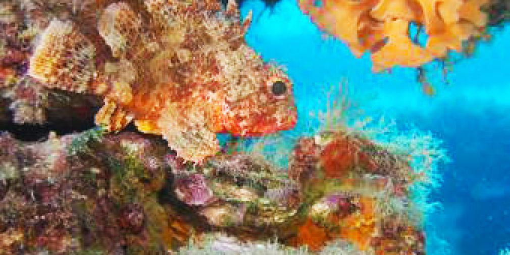 Réchauffement Climatique et Acidification des Océans : vidéo Bleu Océan