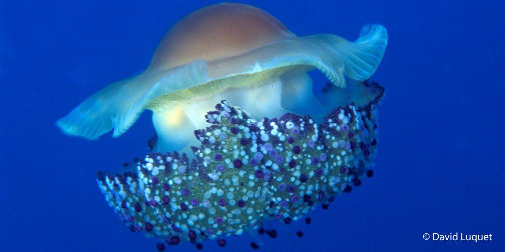 """""""L'OCEAN, régulateur du climat"""" : exposition et conférence au Domaine du Rayol"""