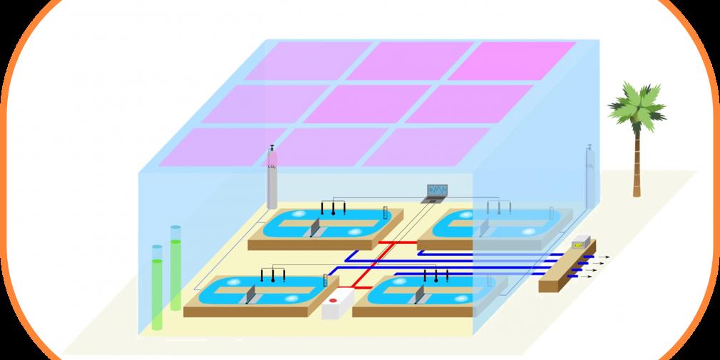 """""""Les fermiers de la mer"""" : aquaculture et microalgues"""