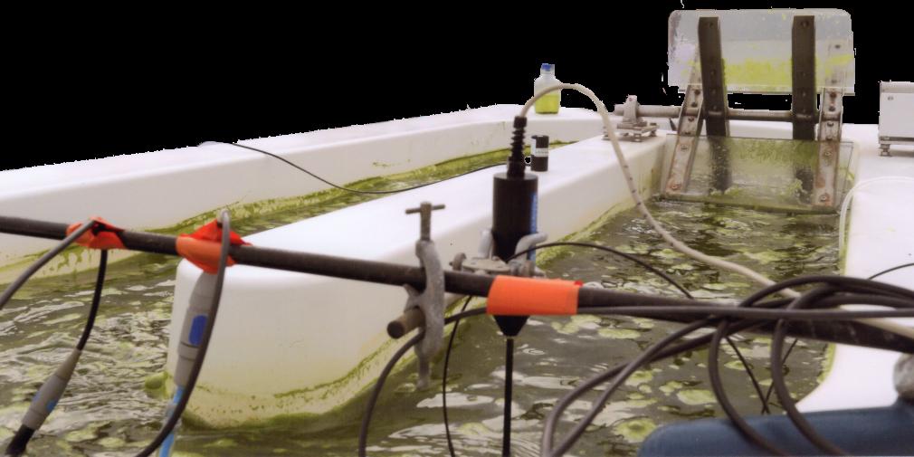 Alimentation, énergie, cosmétique : la solution des microalgues
