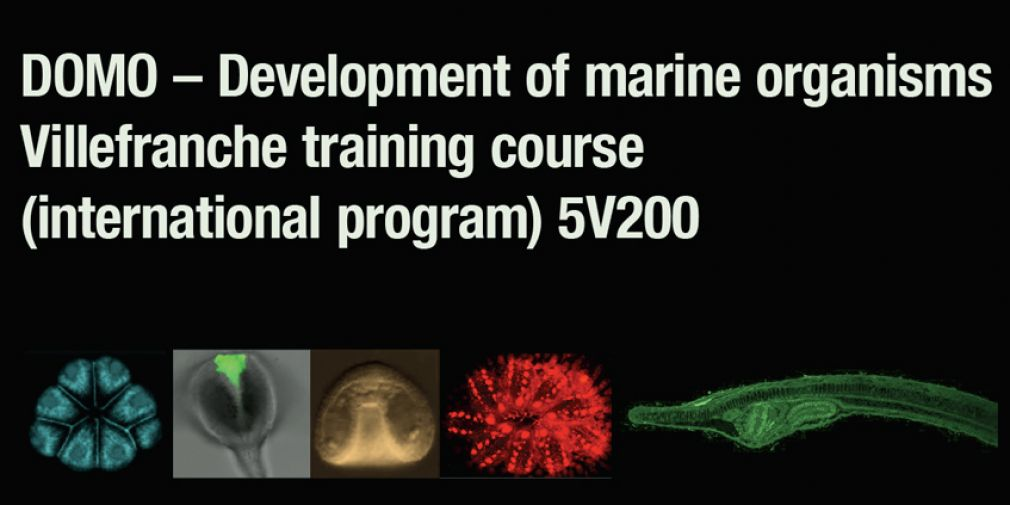 DOMO – Development of marine organisms Villefranche training course  (international program) 5V200