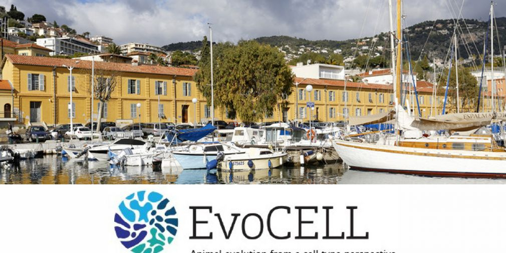 """The """"EvoCELL"""" training network"""