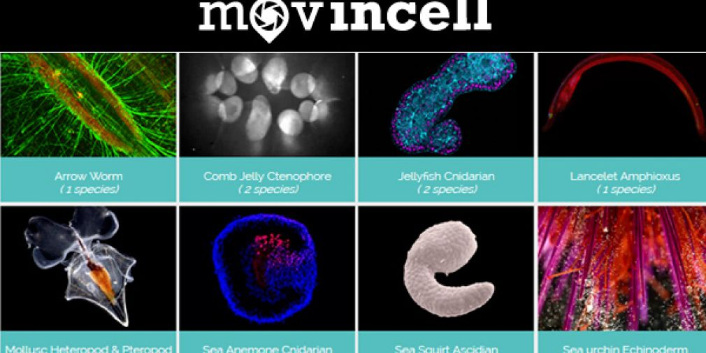 "MovinCell ""Multi-dimensional marine organisms dataviewer"""