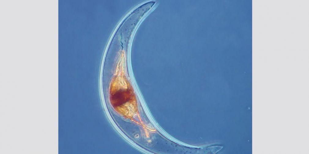 Rencontres planctoniques - Le Journal du CNRS