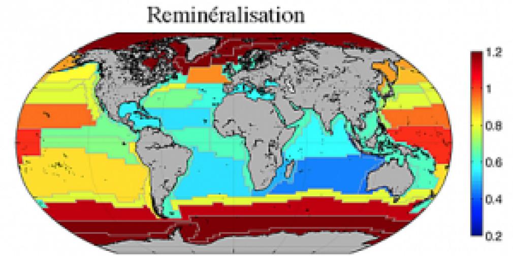 Une première régionalisation de la reminéralisation du carbone