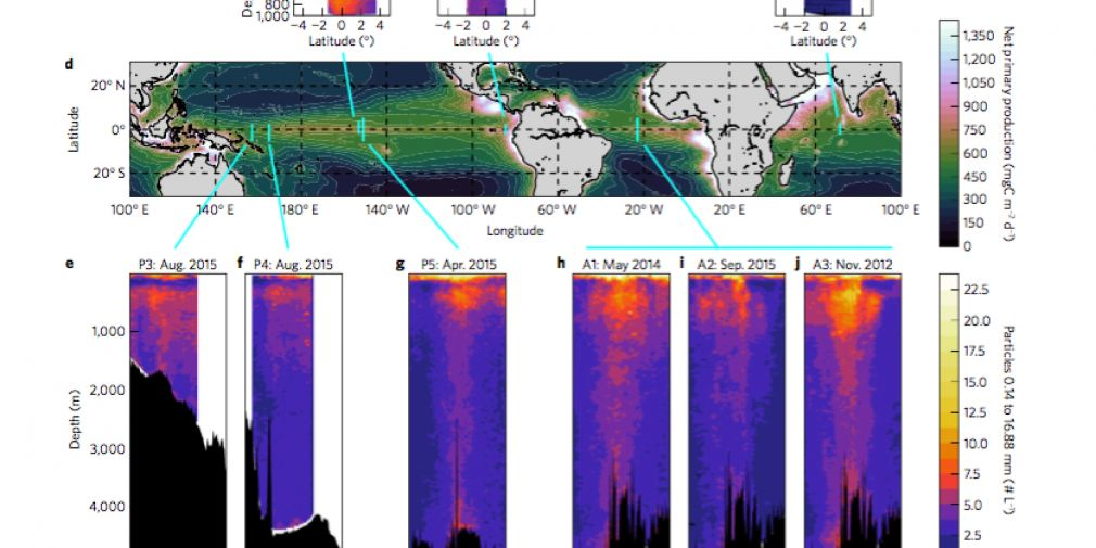 Biological and physical influences on marine snowfall at the equator : a Nature Geoscience paper