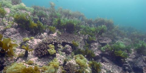 Les récifs coralliens ont commencé à migrer loin de l'équateur