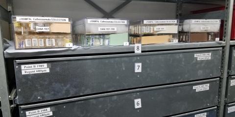 Jeannine Rampal fait un don précieux au Centre des Collections Planctoniques de l'IMEV