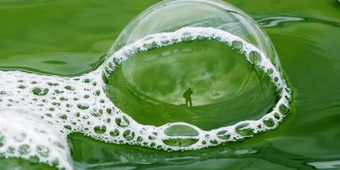 Des microalgues dans nos réservoirs ?