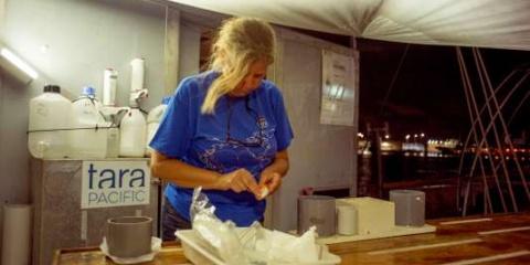Périple dans le Pacifique Nord : la goélette scientifique TARA, journal de bord.