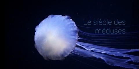 """""""Le Siècle des Méduses"""" récompensé au Festival Galathéa d'Hyères"""