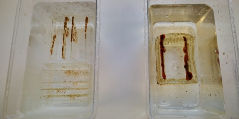 DigitalMarine : un enseignement en ligne pour la recherche en biologie utilisant les organismes marins