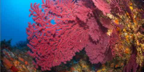Découverte d'un récif corallien au large du Brésil qui intrigue les scientifiques.