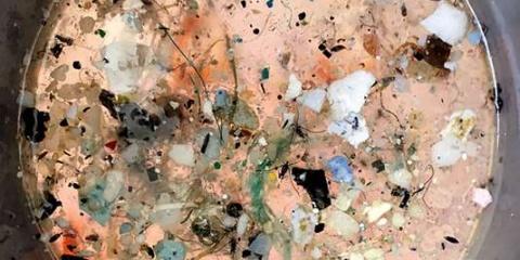 """Nicolas Hulot va """"rencontrer"""" nos scientifiques de TARA au sujet des plastiques."""