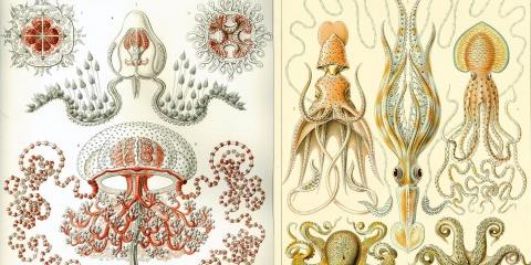 La faune de la rade de Villefranche a inspiré des artistes du 19è siècle