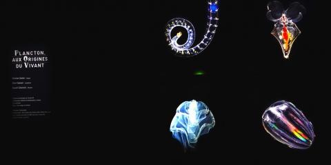 """Le plancton joue sa partition dans """"Le Grand Orchestre des Animaux"""""""