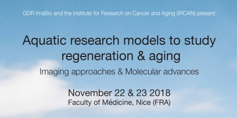 Workshop : Aquatic research models to study regeneration and aging