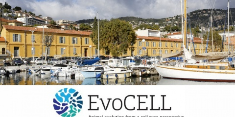 "The ""EvoCELL"" training network"